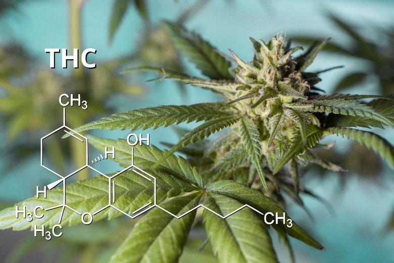 marijuana ad alto contenuto di THC