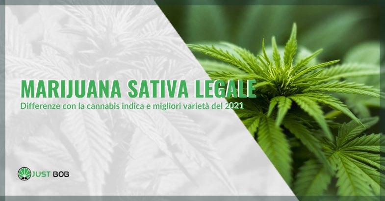 marijuana sativa legale differenze con indica