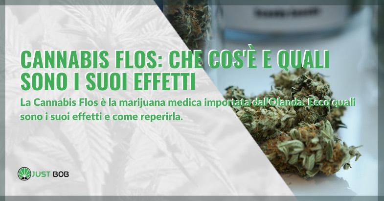 cannabis flos cos'è