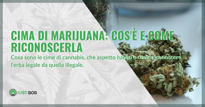 cima di marijuana