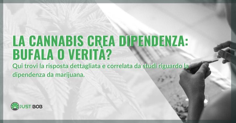 la cannabis crea dipendenza