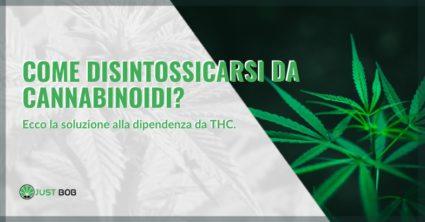 Come disintossicarsi da cannabinoidi
