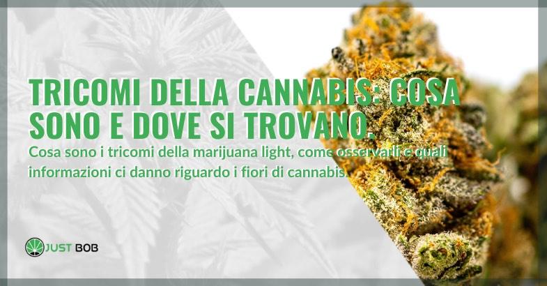 Tricomi della cannabis