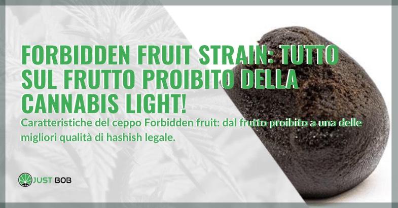forbidden fruit strain informazioni