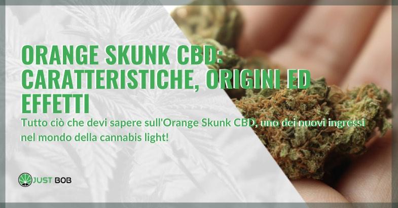 orange skunk cbd caratteristiche origini effetti
