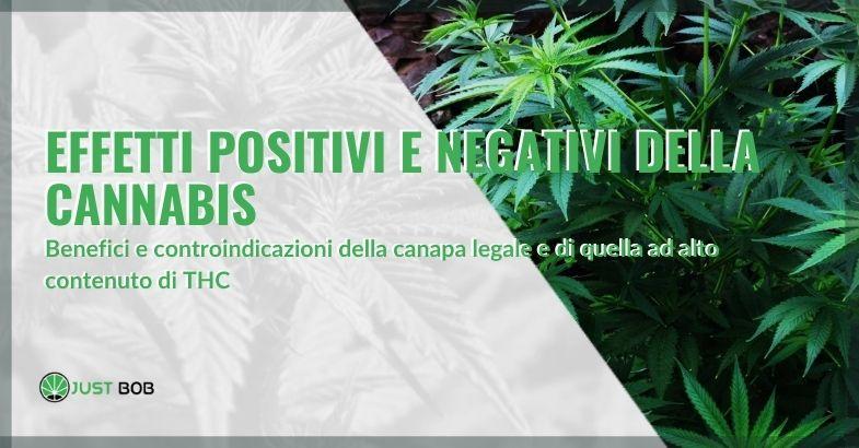Effetti positivi e negativi della cannabis