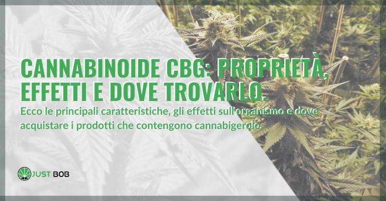 Proprietà ed effetti del cannabinoide CBG.