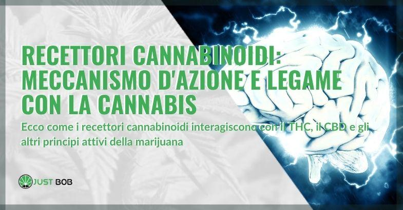 Recettori cannabinoidi