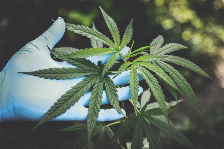 Estrazione cannabinoidi: metodi migliori.