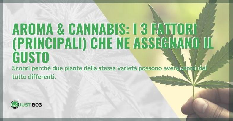 Aroma cannabis: ecco i fattori da cui dipende.