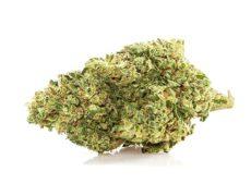 Royale gg#4 cima cannabis legale