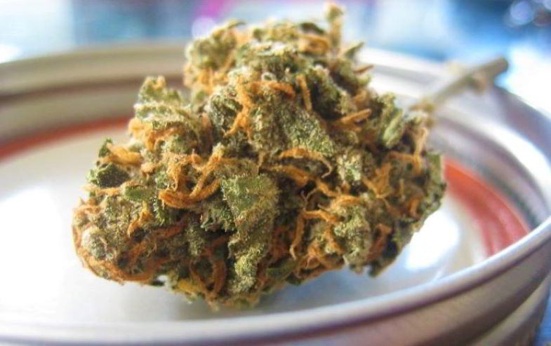 Coltivazione biologica e aromi della cannabis light