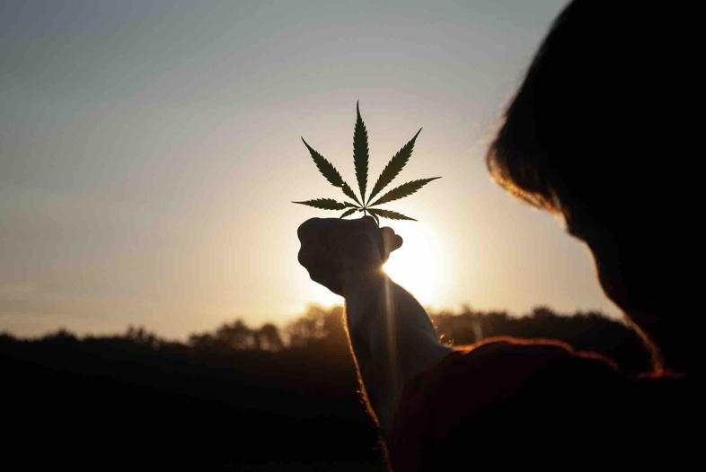 differenze tra effetti cannabis light e cannabis illegale