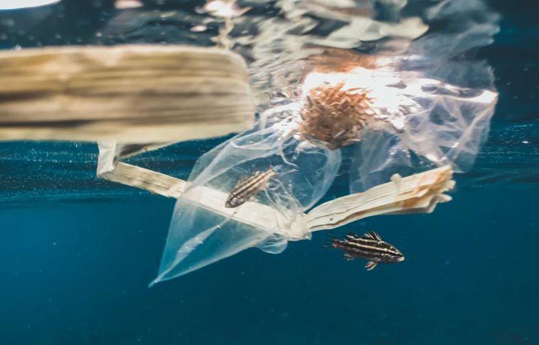 plastica chimica che inquina l'ambiente, da sostituire con quella di canapa