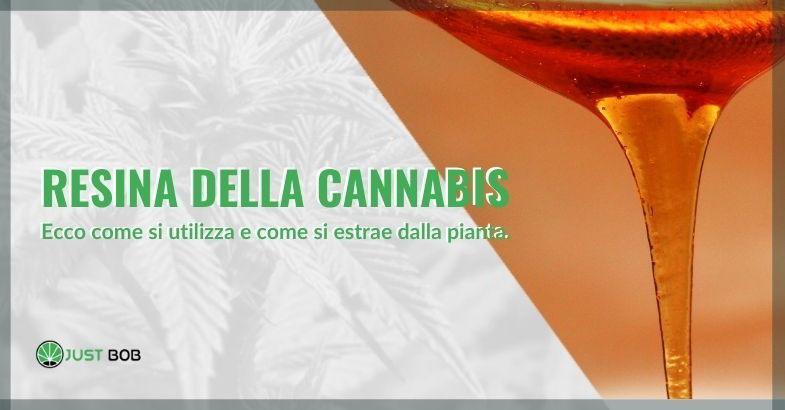 resina della cannabis uso e estrazione