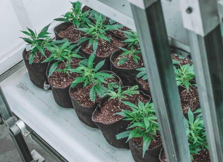 vasi in tessuto per ossigenare le radici della marijuana