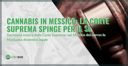La corte suprema in Messico dice si alla marijuana legale
