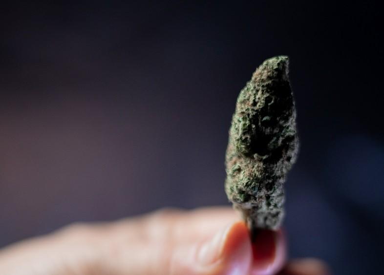 Le differenze riguardo gli effetti psicotropi provocati dai cannabinoidi