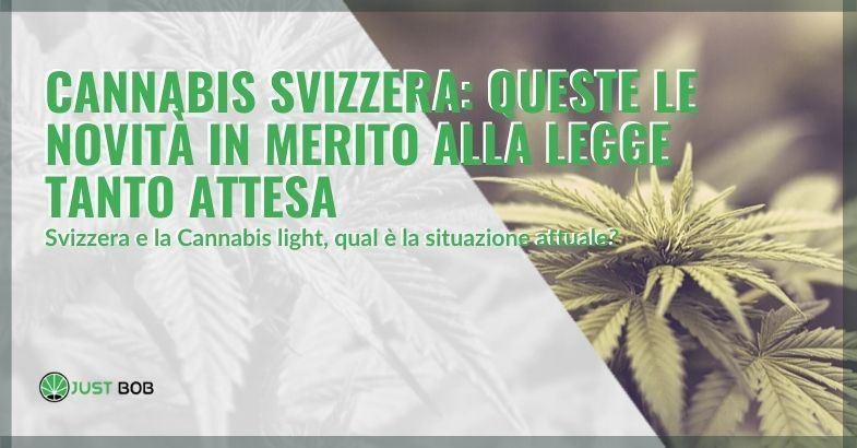 Vediamo qual è la situazione attuale in Svizzera riguardo la cannabis