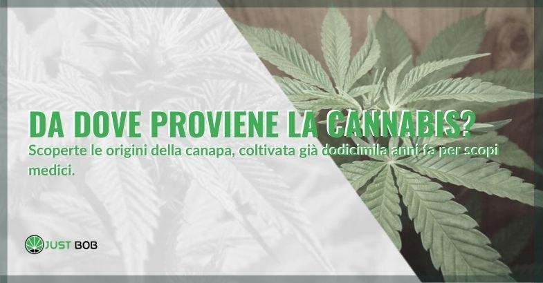 Qual è la provenienza della cannabis? Le origini secondo la storia.