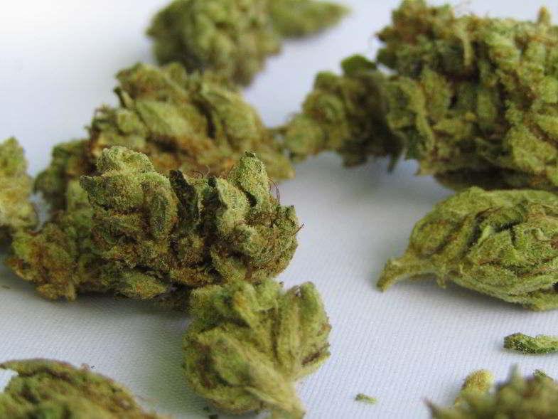 cime di cannabis da cui estrarre la resina